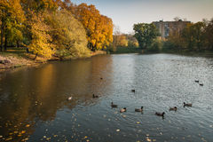 Autumn in  Moscow parks, Russia Royalty Free Stock Image