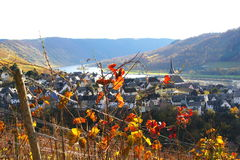 Autumn in Moselle valley. With wine village Enkirch Stock Photos