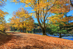 Autumn Moses Cone Memorial Park North Carolina Arkivfoto