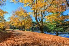 Autumn Moses Cone Memorial Park North Carolina. Autumn at one of Moses Cone Memorial Park trails near Blowing Rock, North Carolina just off the Blue Ridge Stock Photo