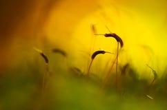 Autumn moss Royalty Free Stock Image
