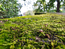 Autumn moss Royalty Free Stock Photography