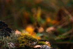 Autumn moss Royalty Free Stock Photos