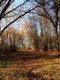 Autumn motive 1 Royalty Free Stock Photo