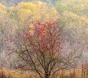 Autumn Motive Royalty Free Stock Photos