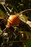 Autumn Motives Imagens de Stock Royalty Free