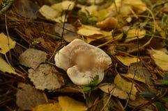 Autumn Motives Imagens de Stock