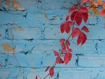 Autumn Motives Belle foglie 86 immagine stock