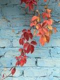 Autumn Motives Belle foglie 69 immagine stock