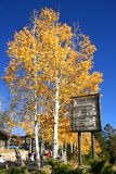 Autumn on Mount Lemon Royalty Free Stock Photo