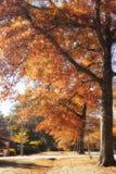 Autumn in Mount Macedon. A photo of beautiful autumn trees in Macedon, Victoria, Australia Stock Photography