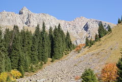 Autumn mountain. Early autumn in the mountain Royalty Free Stock Images