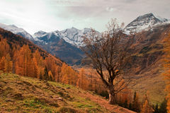 Autumn on the mountain Royalty Free Stock Images