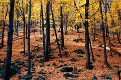 Autumn mountain. Autumn view in bear mountain, new york Stock Photography