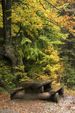 Autumn in mountain Carpathian forest Royalty Free Stock Photos