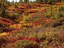 Autumn Mountain Colors fotos de archivo libres de regalías