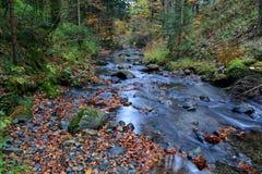 Autumn mountain creek Royalty Free Stock Photos