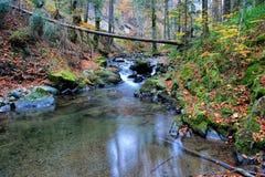 Autumn mountain creek, lakelet and fallen trunk Stock Photography