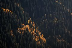 Autumn mountain forest Stock Images