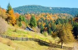 Autumn mountain forest. Sunny autumn mountain forest (on mountainside Royalty Free Stock Photo