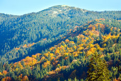 Autumn mountain forest Stock Image