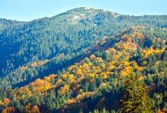 Autumn mountain forest. Sunny autumn mountain forest (on mountainside Stock Image