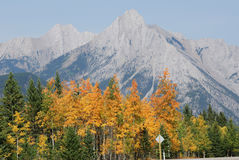 Autumn mountain and forest Stock Images