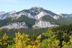 Autumn mountain and forest Royalty Free Stock Image