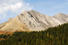 Autumn mountain and forest Royalty Free Stock Photos