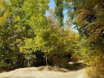 Autumn in the mountain forest. Royalty Free Stock Images
