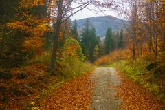 Autumn in the mountain forest Stock Photos