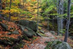 Autumn Mountain Forest con las escaleras Foto de archivo