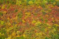 Autumn mountain forest. Autumn fall mountain forest background Royalty Free Stock Images