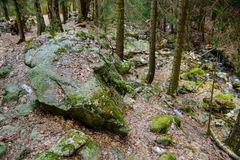 Autumn mountain forest with moss. Beautiful view of mountain forest in fall with trees and moss stock photo