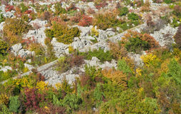 Autumn mountain forest Stock Photography