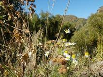 Autumn in the mountain forest. Small Almaty gorge, Kazakhstan Stock Photo