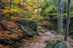 Autumn Mountain Forest with Stairs Stock Photo
