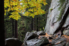 Autumn Mountain Forest Wilderness Stock Foto's