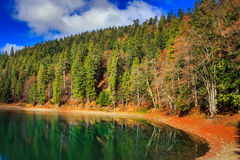 Autumn Mountain lake in coniferous forest Royalty Free Stock Image