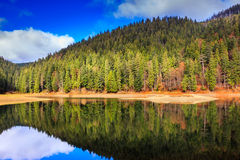 Autumn Mountain lake in coniferous forest Stock Images