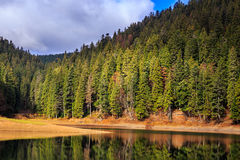Autumn Mountain lake in coniferous forest Stock Photography
