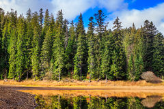 Autumn Mountain lake in coniferous forest Royalty Free Stock Photo