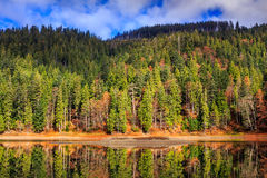 Autumn Mountain lake in coniferous forest Stock Photos