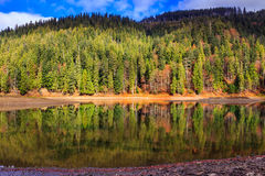 Autumn Mountain lake in coniferous forest Royalty Free Stock Images