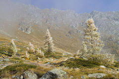 Autumn mountain landscape. Mountain landscape with frosted trees and blue sky Stock Image