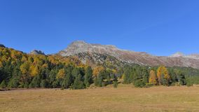 Autumn mountain landscape. In October with blue sky, pines and larches stock photo