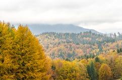 Autumn mountain landscape background. Stock Image