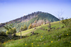autumn mountain  landscape with colorful forest Royalty Free Stock Photo