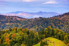 Autumn mountain landscape with colorful trees Royalty Free Stock Photography
