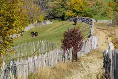 Autumn mountain landscape with fence and animals. Stock Photo